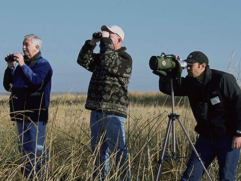 birdwatching1.jpg