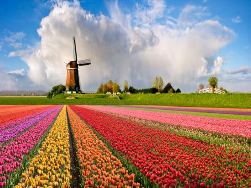 Tulip-Fields-Netherlands-4.jpg